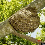 Honey bee hive. Photo courtesy of Timothy Haley, USDA Forest Service, Bugwood.org.